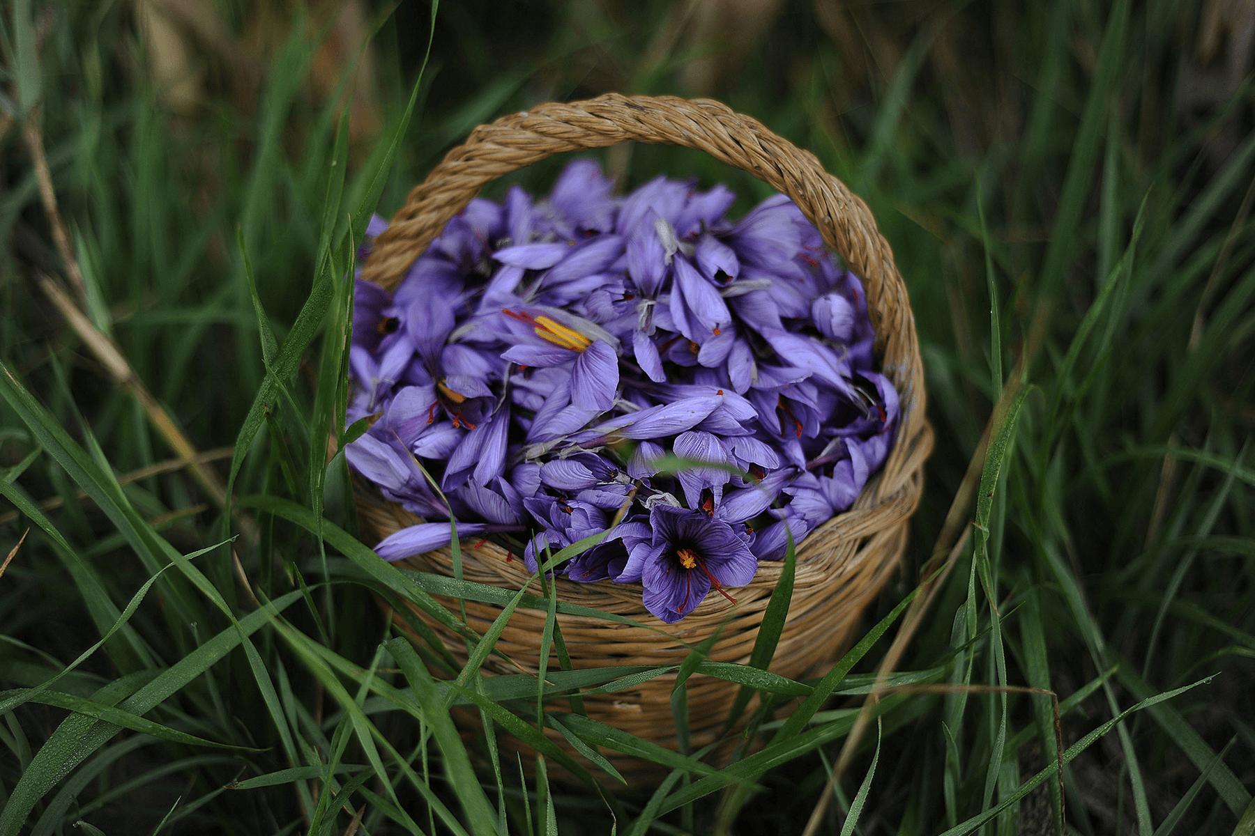 Studio La Regina - fiori di Zafferano Del Re
